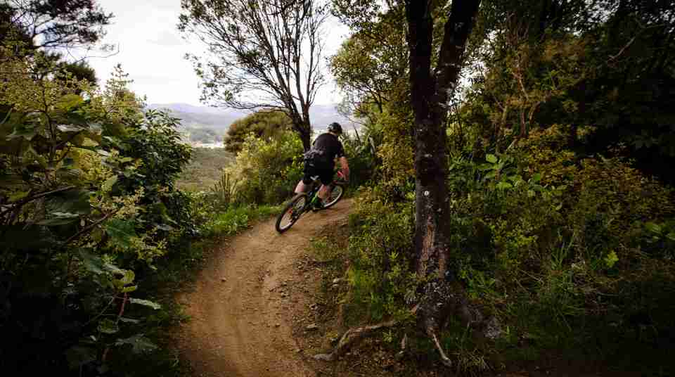 Biker on trail at Wainuiomata Mountain Bike Park