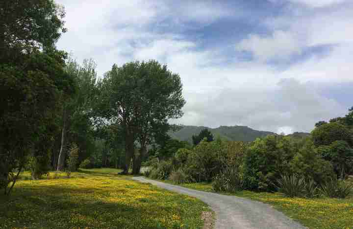 Waikanae Trail view from the track